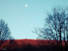 Is it night or day? (nousku) Tags: coolpix florilege culpeper virginia winter