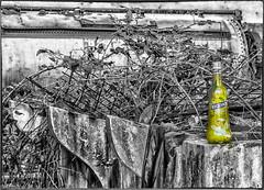 Poveglia - Laguna di Venezia (camperpida) Tags: poveglia luogo abbandonato abandoned lazzaretto lazaret leper hospital luoghi abbandonati venice venezia isola lagoon island