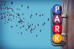 Flock Fleeing Parking (dctsct) Tags: pigeons d90 nikond90 nasheville composite lookingup park sign sepiatone nikon nashville tennessee unitedstates us