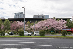 National Theatre of Japan (takashi_matsumura) Tags: national theatre japan ngc hayabusacho chiyodaku tokyo sigma 1750mm f28 ex dc hsm os nikon d5300 architecture cherry blossoms