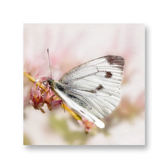 Summer friend. (BirgittaSjostedt.) Tags: animal antenna beautiful beauty blossom bright bugs butterfly color colorful delicate ecology texture birgittasjostedt insect macro magicunicornverybest ie