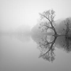 Stillstand (Jaques10000) Tags: nikon d750 havelland landscape bäume reflections fog nebel tree monochrome blackwhite longexposure