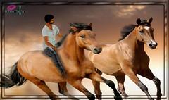 coolhain grau (coolhain) Tags: horse riding man