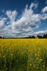 Yellowfield (Lord Markus) Tags: yellow flowers fiori gialli field campo colza rapeseed veniano appianogentile primavera spring sky cielo nuvole clouds cloudscape cpl sigma 1020 wide angle natura nature prato green lombardia italy italia nikon d300s