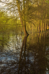 Reflections (RD400e) Tags: canon eos 5d mk3 24mm tse mk2 tiltshift gitzo bwpolariser water woods trees reflections outdoors walking delamere forest england