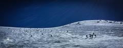2017-04-23 Gran Paradiso SA2 2017-36 (scuolagilardoni) Tags: valsavaranche vittorioemanuele granparadiso valdaosta sa22017 scialpinismo scuolagilardoni skialp skitouren sci corsi caicomo cai corsoavanzato gilardoni valsavarenche valledaosta italia