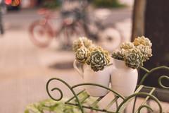 Succulent city (ninasclicks) Tags: succulent plants street urbanjungle bicycle bike bokeh dof