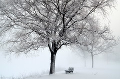 Lonesome Solitude (Captions by Nica... (Fieger Photography)) Tags: weather winter winterstorm serene snow snowstorm storm outdoor cold covered trees tree branches nature bench fog foggy misty mist march quebec canada parc
