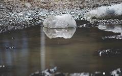 the melt is on. (taralees) Tags: april sunshine springpartyhasbegun springonrabbitridge floraandfauna