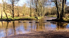 The stepping stones (eucharisto deo) Tags: cannock cannockchase chase tolkein brook glass sherbrook valley stepping stones aonb