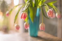 Flowers and love (Nathalie Le Bris) Tags: backlight contraluz contrejour fleur flor flower printemps tulipes