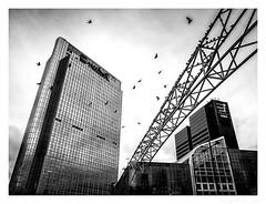 Rise (jørnØdegård) Tags: fujinon 16mm lines sky birds xt1 fujifilm norway oslo architecture city blackandwhite street