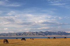 Summer pasture at Lake Son Kul (Joost10000) Tags: lake sonkul sonkol lakesonkul kyrgyzstan asia centralasia wild wilderness water freshwater nature outdoors pasture horse summer canon eos canon5d narynprovince oblast beauty scenic natur natura evening