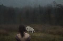 (Mariona Boada) Tags: wolf wood girl facetoface fantasy art photography conceptual photoshop soul battle cherokeelegend