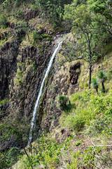 Gap Creek Falls (NettyA) Tags: 2017 australia cunninghamsgap gapcreekfalls mainrangenationalpark qld queensland bushwalk scenicrim gapcreek waterfall grasstrees xanthorrhoea plant flora
