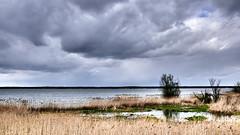 Windy landscape I (radimersky) Tags: lake jezioro turawskie polska poland europa europe landscape krajobraz dzień day clouds cloudy chmury wind wiatr wietrznie windy szuwary rushes woada water skyline widok lumix panasonic dmclx100 fourthirds 43 micro opolskie silesia śląsk turawa woda sky niebo wiosna spring