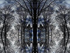 Watchmen (Ed Sax) Tags: baum bäume wald lichtung abstrakt beobachten blau schwarz edsax art kunst photokunst photoart kunstphotographie weis stalking