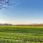 Dutch landscape, Woudenberg, Netherlands - 4880 thumbnail