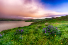 Wind Blown (stuanderson7) Tags: grass wind sunrise flowers nature dawn mountains outdoor hills clouds morning lake reservoir water countryside field california vibrant larkspur sky green landscape sonya6000 samyang12mmf2 californiapoppies windblown