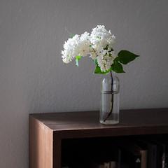Morning light (Ralf Sternberg) Tags: flower stilllife interior shelf bookshelf bottle flickrfriday corner