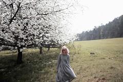 cherry blossom girl by worteinbildern -  Blog/ Facebook/ Print Shop/ Envelope Shop /Instagram