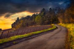 route-du-mont-aimé Bergés les Vertus (ma03ri09n50) Tags: chemin route le mont aimé bergère les vertus département51marne france nordestdefrance lever du soleil bois forêt vignes vignesdelachampagne ef 2470mmf28liiusm canoneos5dsr