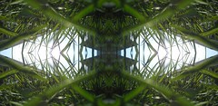 Eyes from within the grasslands (rhonda_lansky) Tags: green grass abstract art eye seen seeing dream dreaming otherworlds plants creations formations nature design abstractart visual plant tree abstractoutdoors outdoor mirroredshapes mirroredabstract mirrorart symmetryart symmetrical symmetricalart symmetryartist symmetricalartist earth expressive abstractplant rhondalansky organicpattern texture lansky foliage rhonda surreal pattern organic poems shortstories storys writing fantasy earthday greenart greenabstract greennature spring dreams
