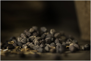 Macro Mondays (Option) - Member's Choice: Seeds - Mirabilis Jalapa Seeds