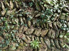 2005-03-27-0025.jpg (Fotorob) Tags: engeland erfscheiding muur cornwall planten voorwerpenoppleinened england veryan