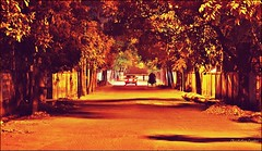 We Are Alone In The Silent Road (ChandrahaasCreation) Tags: life road lighting camera city trees light shadow people brown 3 black color tree nature colors beauty look car wheel night contrast digital dark lens landscape lights three leaf cool nice colorful warm soft alone quiet different silent close natural wide move we vehicles together cannon brunch vehicle headlight walls dhaka dslr decorate less rikshaw
