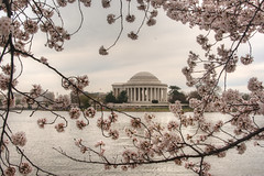 Cherry Blossom Frame (Cocoabiscuit) Tags: flower cherry dc washington blossom nationalmall jeffersonmemorial tidalbasin cherryblossomfestival 18200mm cocoabiscuit d7100