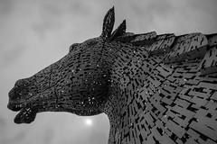 Scottish Kelpie Reaching up (Thanks to everyone, 500K+ views!! www.christopherw) Tags: horse andy scott scottish helix sculptures kelpies tru2bw