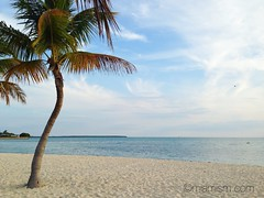 Key Biscayne Beach (miamism) Tags: ocean blue beach palms sand miamibeach keybiscayne miamiviews coconutpalms miamirealestate keybiscaynebeach miamisms miamipalms