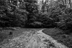 _MG_6841 (QueenSunshine III) Tags: park wood trees bw parco tree nature alberi natura bianco bianconero bosco boschi