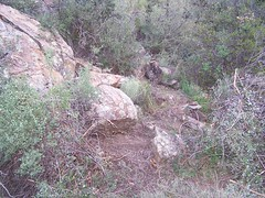 Start of the new trail that branches off toward Iron Spring Mtn., bypassing the berm rd.
