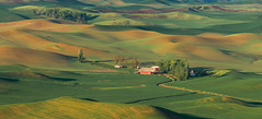 Steptoe Butte Farmhouse (CraigGoodwin2) Tags: farm rollinghills palouse easternwashington greenfields drylandfarming steptoebutte inlandnorthwest steptoebuttestatepark