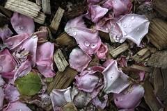 ([] kikistory.com) Tags: flower korea seoul kiki southkorea    republicofkorea    kikistory rpubliquedecore poblachtnacir