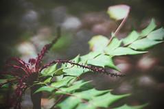 052514 02 (atthecarnival) Tags: atlanta plant flower macro green nature digital photoshop georgia lens 50mm leaf bokeh sony olympus f18 zuiko mirrorless olympuszuiko50mmf18 nex3n sonynex3n