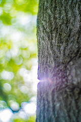 20140528-M1280416 (afrjc) Tags: lens indiana equipment redoak depauw canon50mm095dream depauwdininghalltrees