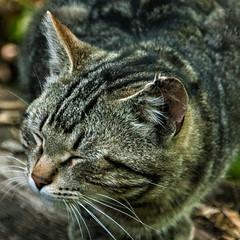 2014 cat outdoor animal