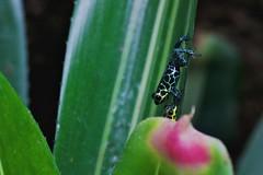 Kissing Frogs (Michael Bentley) Tags: aquarium frogs nationalaquarium baltimoreaquarium canonef100mmf28lmacroisusm