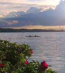 what a view... (M. Skovby Madsen) Tags: ocean bridge sea flower water sunshine clouds denmark canoe middelfart