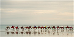 broome-1679-ps-w (pw-pix) Tags: sea ocean beach cloudy clouds sunset colours cliche obligatory camel camels shipsofthedesert walking riding line shadows reflections red shapes pattern repetition horizon calm peaceful tranquil warm afternoon lateafternoon cablebeach broome thekimberley wa westernaustralia australia peterwilliams pwpix wwwpwpixstudio pwpixstudio