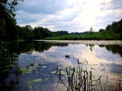 #summer #lake #forest #beautiful #followme #like #this #belarus (m4rakesh) Tags: summer lake beautiful forest this like followme