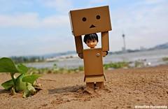 10177862_10201859142303550_2365452395320963875_n (WovenTam) Tags: toys danbo danboard minidanboard