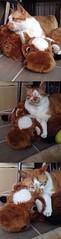키키의 동생 사랑 (yuna) Tags: me2day me2photo 방석이
