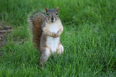 Squirrel - explore 2014-07-22