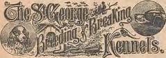 Anglų lietuvių žodynas. Žodis quail1 reiškia n (pl quail) zool. putpelė lietuviškai.
