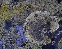 Art of Nature (Kari Siren) Tags: art nature stone figure lichen sarek