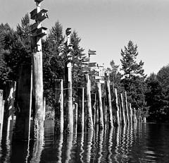 Bird Houses in Tod Inlet (nicolechamilton) Tags: ocean bw birds kayak blackberry victoria saanich q10 todinlet